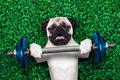 sport dog - PhotoDune Item for Sale