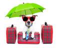 dog vacation - PhotoDune Item for Sale