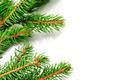 Christmas tree branch - PhotoDune Item for Sale