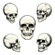 Human Skull - GraphicRiver Item for Sale