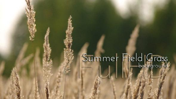 Summer Field Grass