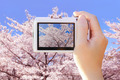 camera taking photo with cherry Blossoms - PhotoDune Item for Sale