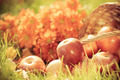 Fruits and flowers in autumn - PhotoDune Item for Sale