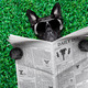 cool dog newspaper - PhotoDune Item for Sale