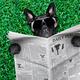 cool dog newspaper - PhotoDune Item for Sale