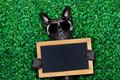 cool dog - PhotoDune Item for Sale