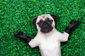 yoga dog - PhotoDune Item for Sale
