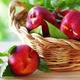 Fresh  nectarines in the basket on table - PhotoDune Item for Sale
