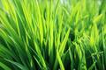 Fresh green plant - PhotoDune Item for Sale