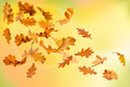 Autumn oak leaves falling - PhotoDune Item for Sale