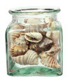 Seashells in Bottle - PhotoDune Item for Sale