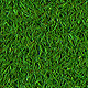 Short Realistic Grass - GraphicRiver Item for Sale