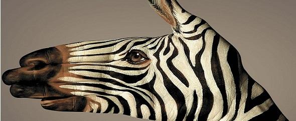 Zebra%20big%201