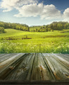 Summer pastoral background with wooden planks - PhotoDune Item for Sale
