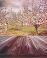 Wooden planks with apple orchard in background - PhotoDune Item for Sale