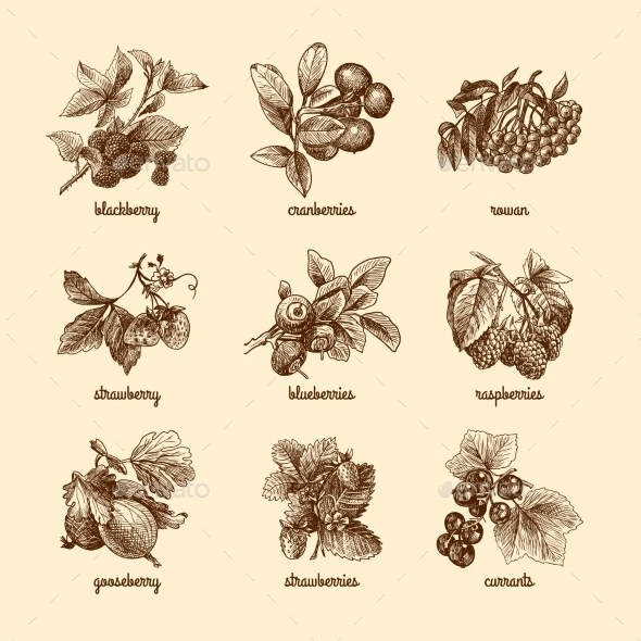 GraphicRiver Sketch Berries Set 8899006