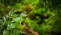 Iguana in Wild Green Amazon Jungle - PhotoDune Item for Sale