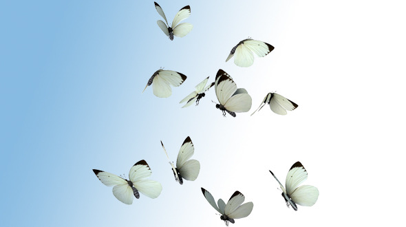 Realistic White Butterflies