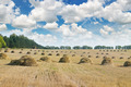 Field with Stacks of straw and blue sky - PhotoDune Item for Sale