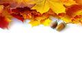 autumn maple leafs - PhotoDune Item for Sale