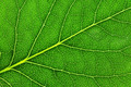 Leaf of a plant - PhotoDune Item for Sale