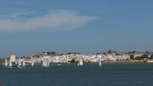 Many Sailing Yachts Moving in the Bay 884