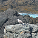 Seagull Sitting on the Rocks 894 - VideoHive Item for Sale