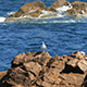 Seagull Sitting on the Rocks 899 - VideoHive Item for Sale