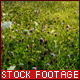 Sunny Flower Meadow - VideoHive Item for Sale