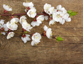 blossom on wood - PhotoDune Item for Sale
