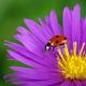 Ladybug and flower - PhotoDune Item for Sale