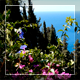 Flowers And Sea 2 - VideoHive Item for Sale