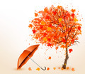 Autumn background with autumn leaves and red umbrella.  - PhotoDune Item for Sale