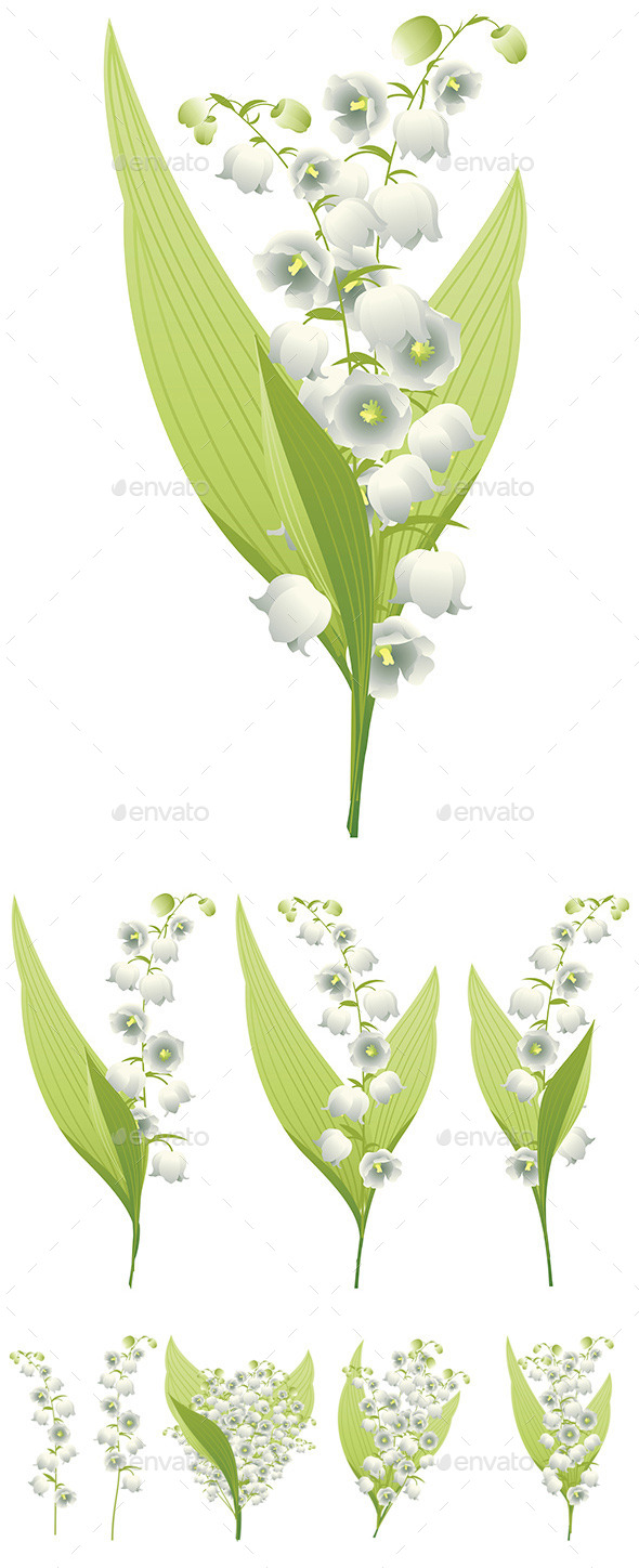 GraphicRiver Lily of the Valley 8927905