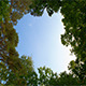 Sky and Clouds in the Forest Treetops - VideoHive Item for Sale