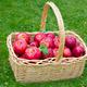 Honeycrisp Apples - PhotoDune Item for Sale