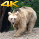 Yellow Bear in the Forest