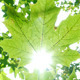 Foliage Through Rays 2 - VideoHive Item for Sale