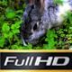 Rabbit - VideoHive Item for Sale