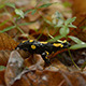 Yellow-Black Salamander - VideoHive Item for Sale