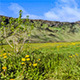 Iceland Green Grass Mountains Clouds Dandelions - VideoHive Item for Sale