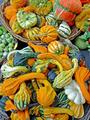 Pumpkins assortment - PhotoDune Item for Sale