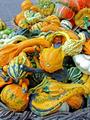 Small pumpkins - PhotoDune Item for Sale