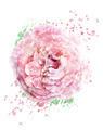Watercolor Image Of Rose - PhotoDune Item for Sale