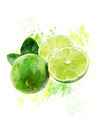 Watercolor Image Of  Fresh Limes - PhotoDune Item for Sale