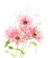 Watercolor Image Of Chrysanthemum - PhotoDune Item for Sale