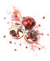 Watercolor Image Of Pomegranate - PhotoDune Item for Sale