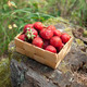 Strawberries in a small wooden basket - PhotoDune Item for Sale