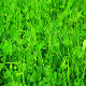 Green Clover Field - VideoHive Item for Sale