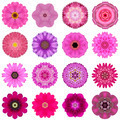 Collection Various Pink Concentric Flowers Isolated on White - PhotoDune Item for Sale